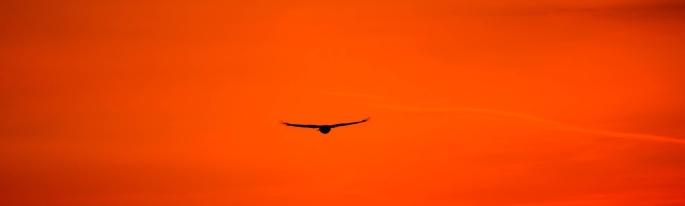 buzzard-2287699_1920