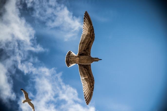 sea-gull-765490_1920